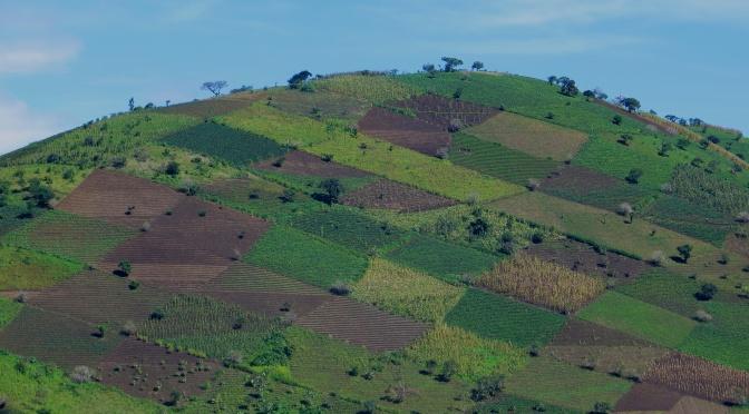 #91 Visit a coffee farm Guatemala: 100 Family Travel Experiences
